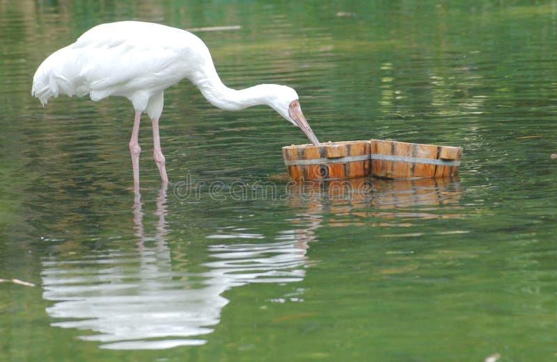 Pájaro En El Lago Fotos de archivo libres de regalías