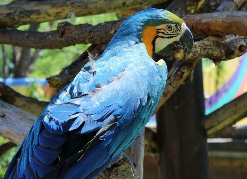 Pájaro en el parque zoológico fotografía de archivo