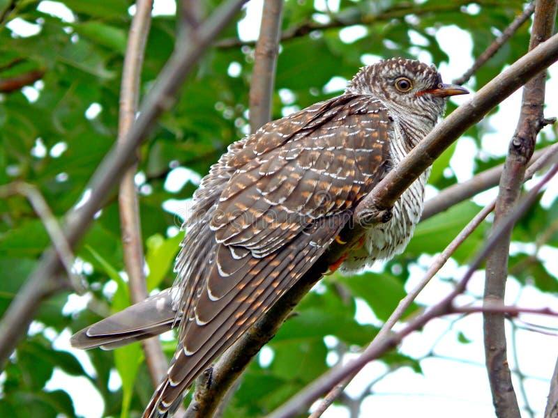 Pájaro en el salvaje foto de archivo libre de regalías