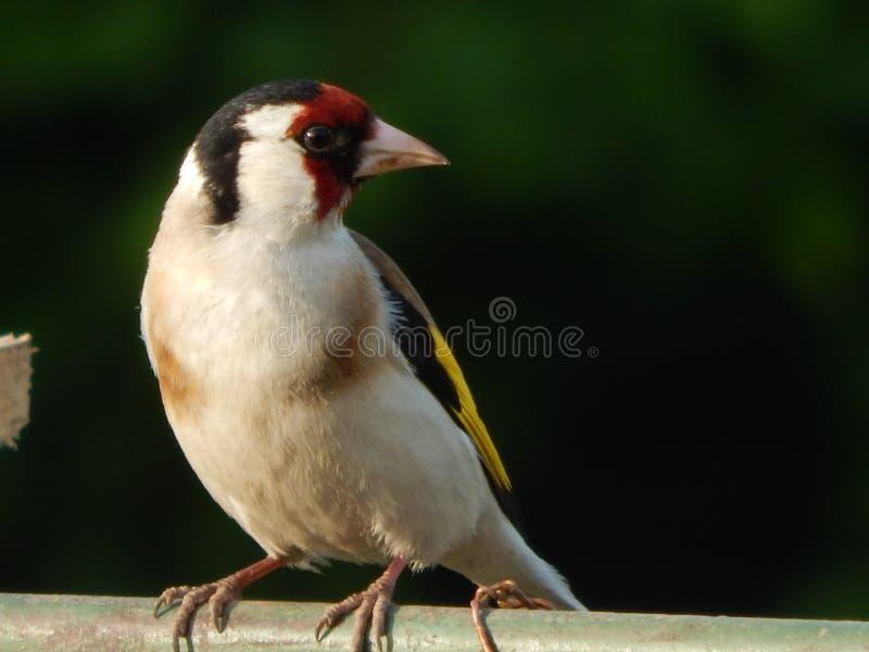 Pájaro en el salvaje fotografía de archivo