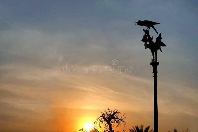 Pájaro en el top del polo eléctrico imagen de archivo