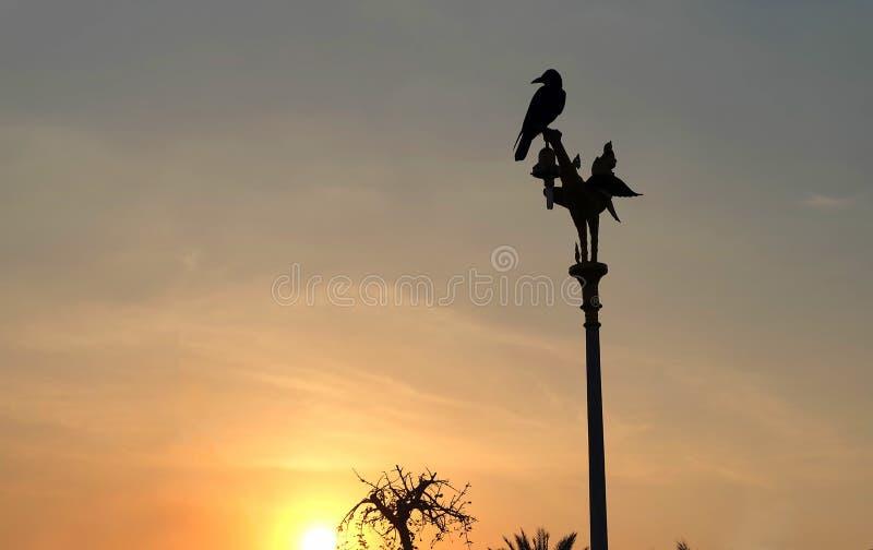 Pájaro en el top del polo eléctrico en la puesta del sol en Tailandia imagen de archivo
