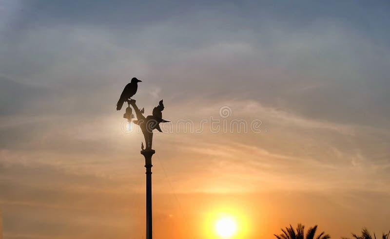 Pájaro en el top del polo eléctrico en la puesta del sol en Tailandia fotografía de archivo libre de regalías