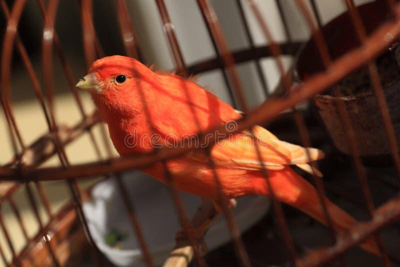 Pájaro en jaula fotografía de archivo libre de regalías