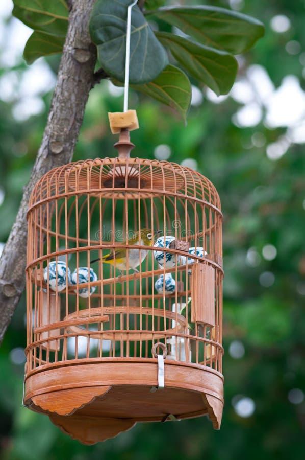 Pájaro en jaula imagenes de archivo