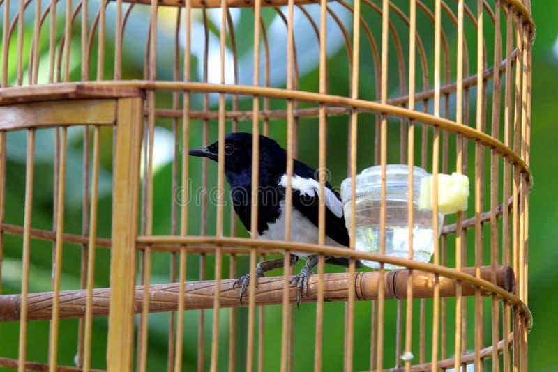 Pájaro en jaula de madera al aire libre imagenes de archivo