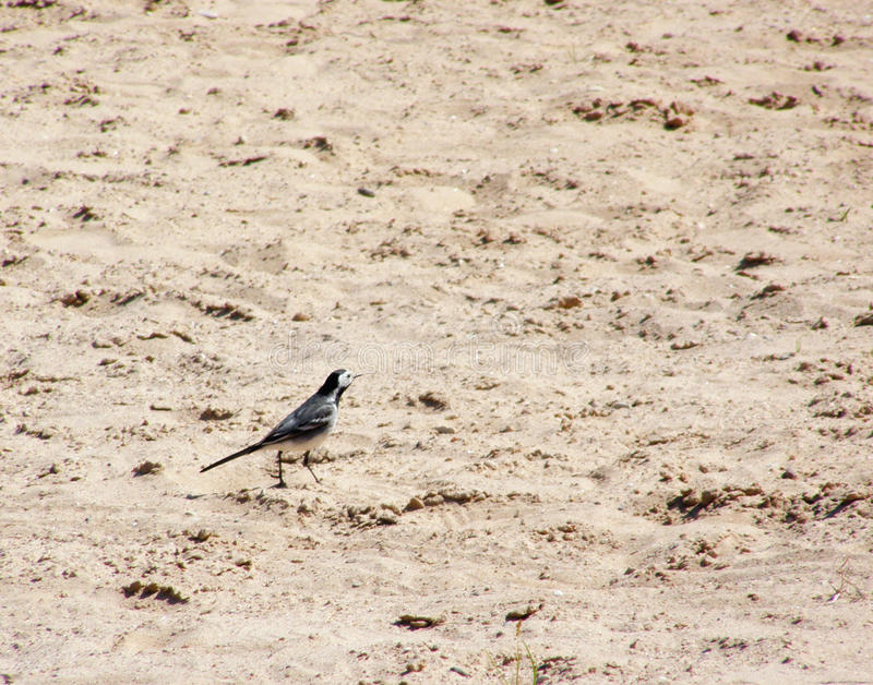 Pájaro en la arena imagen de archivo libre de regalías