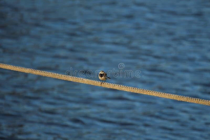 Pájaro en la cuerda foto de archivo