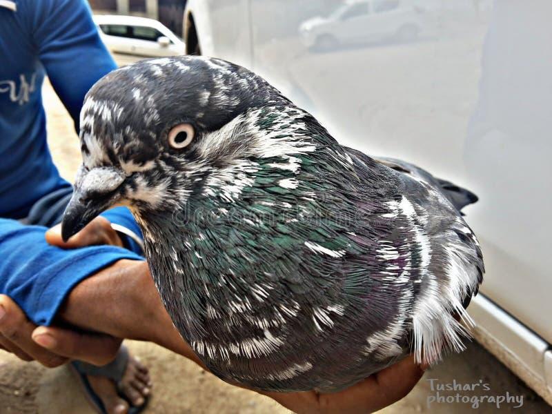 Pájaro en la mano foto de archivo