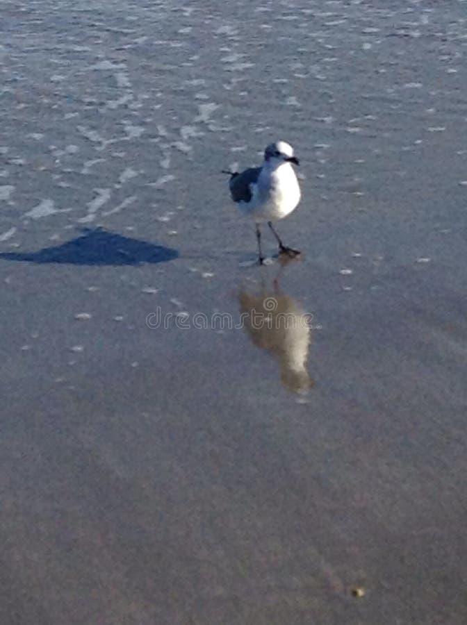 Pájaro en la playa fotografía de archivo libre de regalías