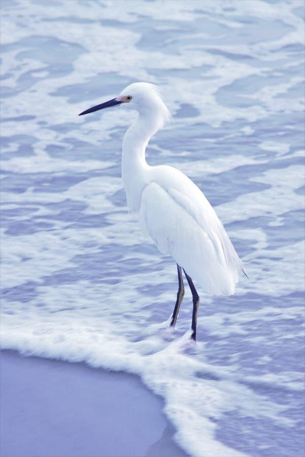 Pájaro en la playa fotos de archivo