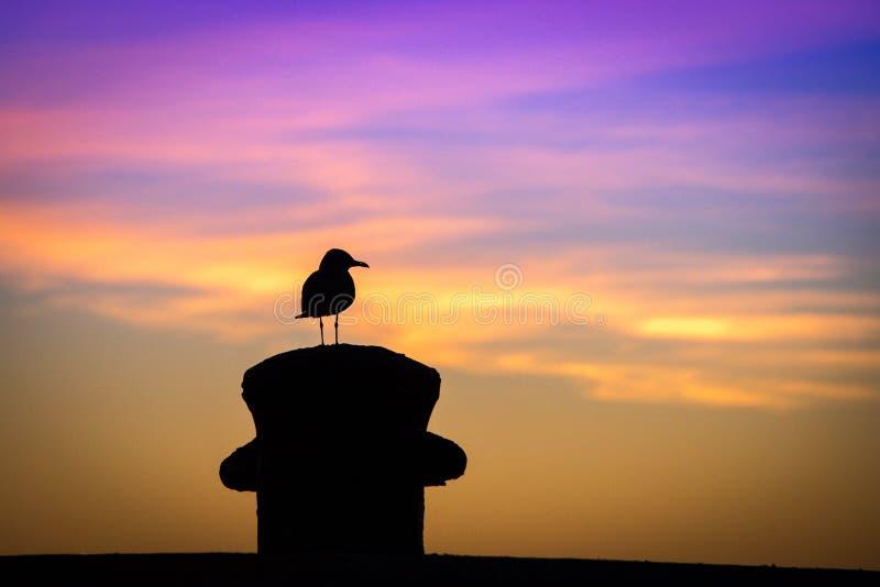 Pájaro en la puesta del sol fotografía de archivo