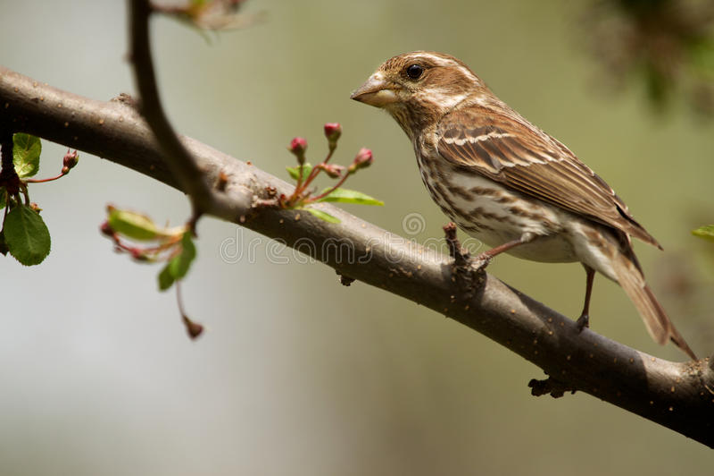 Pájaro en la ramificación imagen de archivo