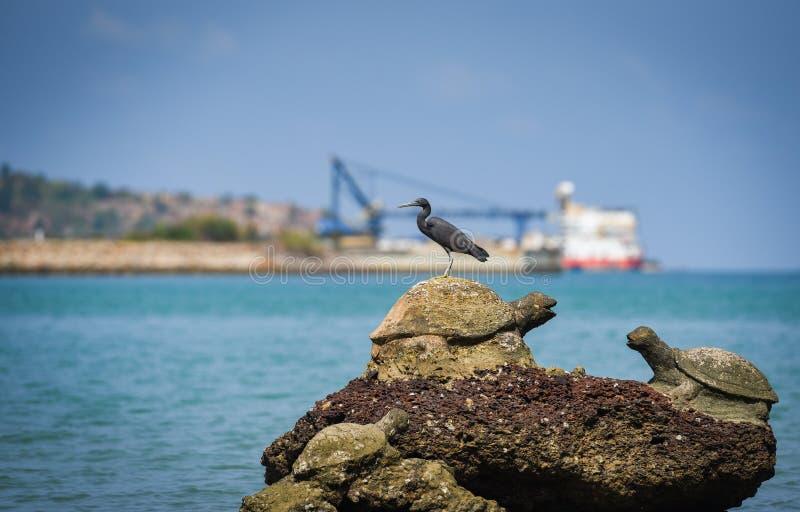 Pájaro en las rocas en el fondo del barco de pesca del océano del mar de la costa de la bahía imagenes de archivo