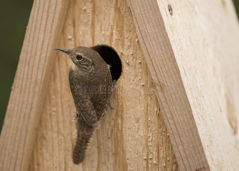 Pájaro en pajarera fotos de archivo