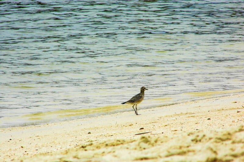 Pájaro en paraíso imagenes de archivo