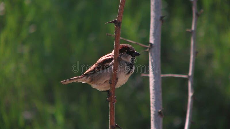 Pájaro en rama en Odessa, Ucrania fotografía de archivo libre de regalías