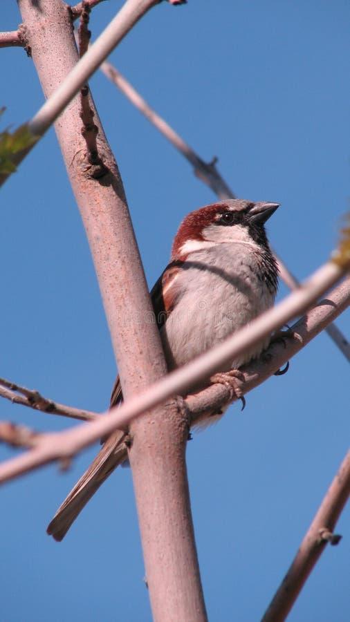 Pájaro en rama en Odessa, Ucrania imagen de archivo