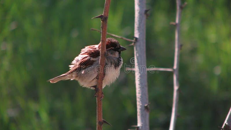 Pájaro en rama en Odessa, Ucrania foto de archivo libre de regalías