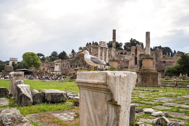 Pájaro en Roma Italia antigua imagen de archivo libre de regalías