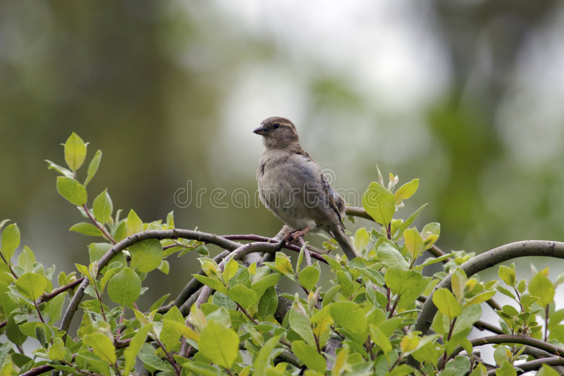 Pájaro en un árbol fotografía de archivo