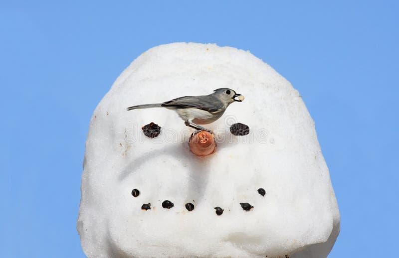 Pájaro en un muñeco de nieve imágenes de archivo libres de regalías