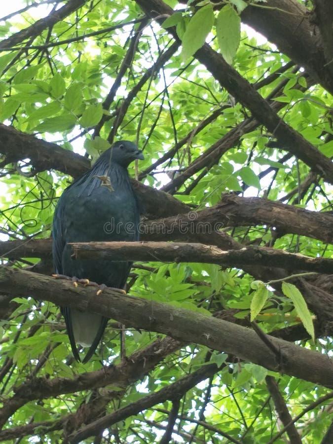 Pájaro en un parque zoológico foto de archivo libre de regalías