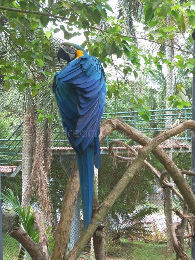 Pájaro en un parque zoológico imagen de archivo
