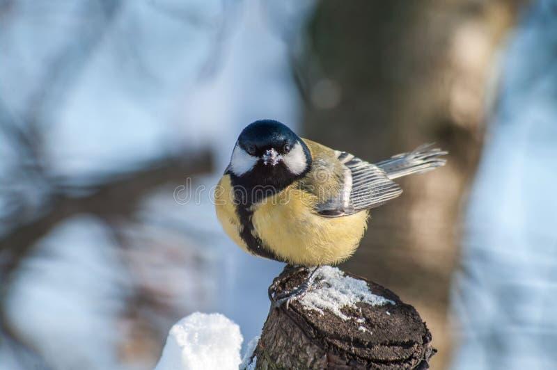 Pájaro en un tocón imágenes de archivo libres de regalías