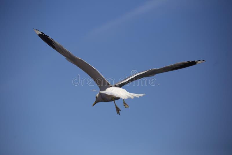 Pájaro en vuelo fotos de archivo