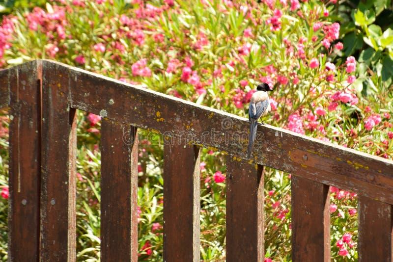 Pájaro encaramado en una puerta del jardín fotografía de archivo
