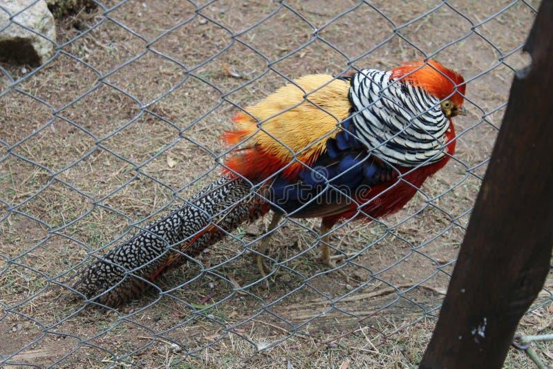 Pájaro enjaulado detrás de una cerca fotos de archivo