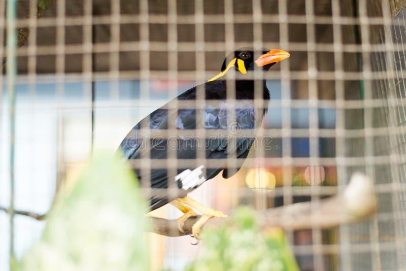 Pájaro esclavizado en la jaula Tailandia fotografía de archivo
