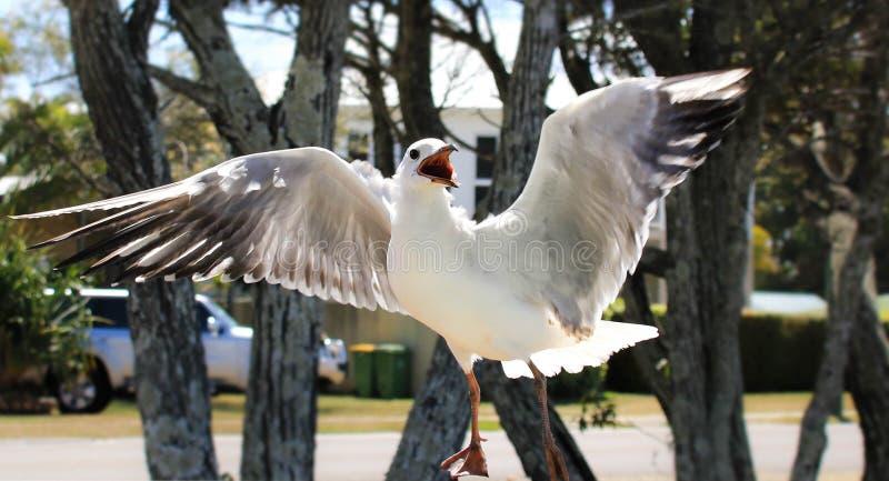 Pájaro hambriento imagen de archivo
