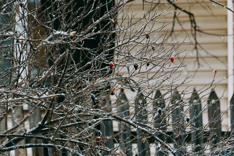 Pájaro hambriento en un árbol imagen de archivo