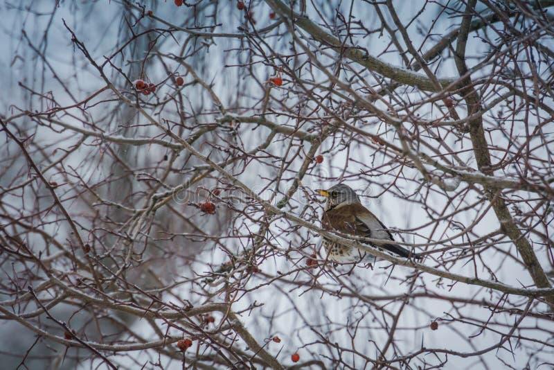 Pájaro hambriento en un árbol imagen de archivo libre de regalías