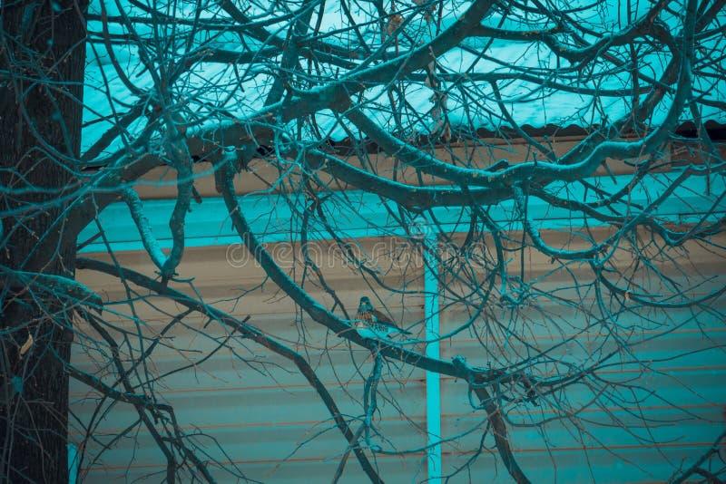 Pájaro hambriento en un árbol fotografía de archivo