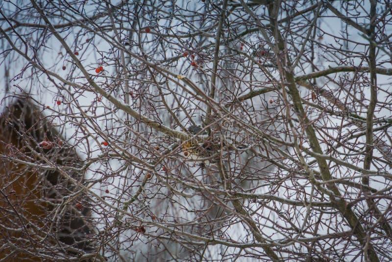 Pájaro hambriento en un árbol fotos de archivo