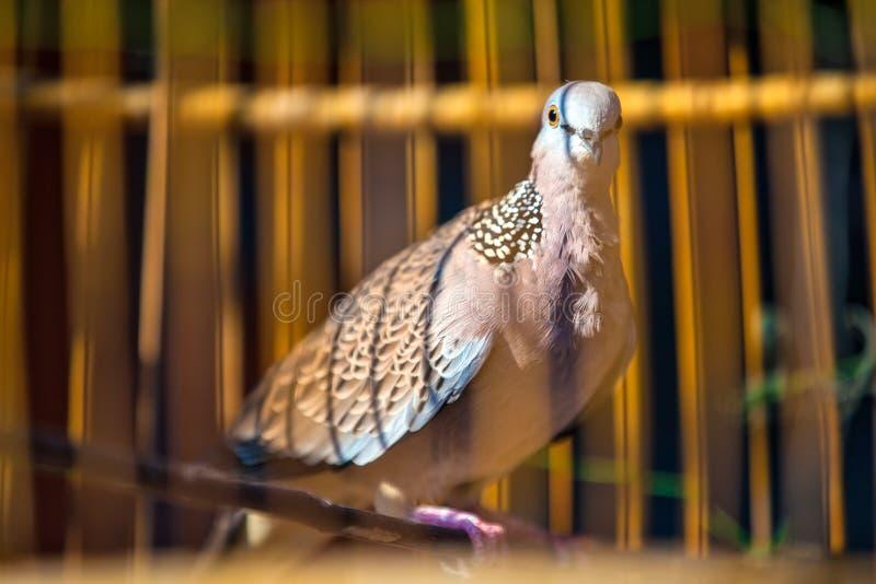 Pájaro hermoso en una jaula, Tailandia foto de archivo