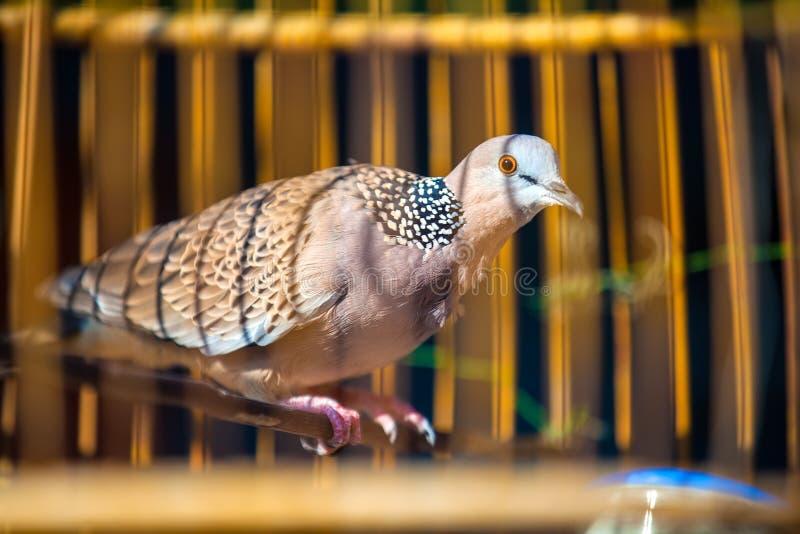 Pájaro hermoso en una jaula, Tailandia fotos de archivo