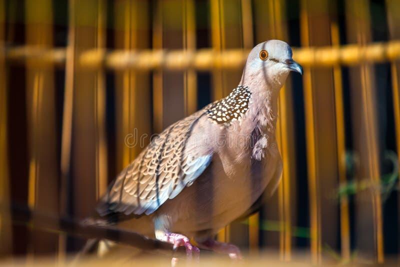 Pájaro hermoso en una jaula, Tailandia foto de archivo libre de regalías