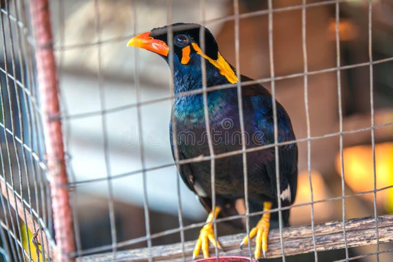 Pájaro hermoso en una jaula, Tailandia fotos de archivo libres de regalías