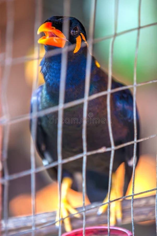 Pájaro hermoso en una jaula, Tailandia imagenes de archivo
