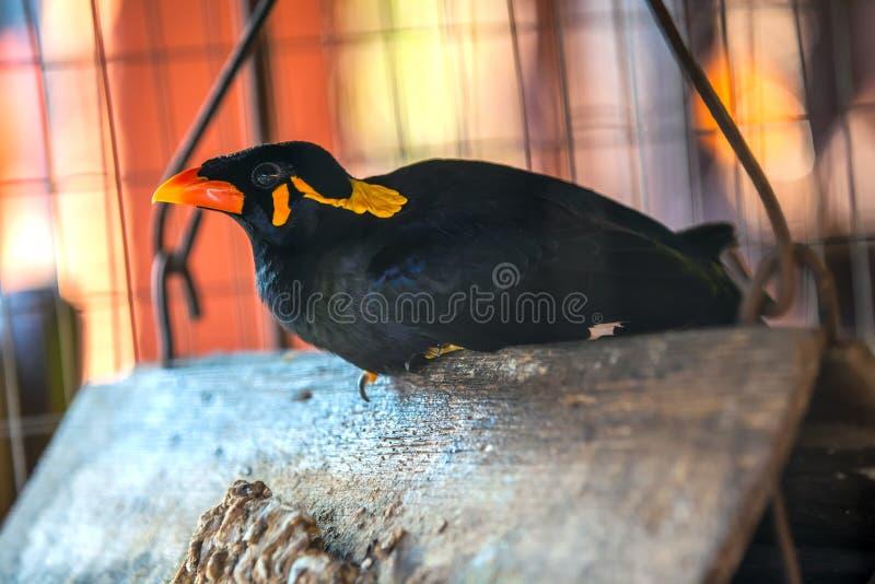 Pájaro hermoso en una jaula, Tailandia fotografía de archivo