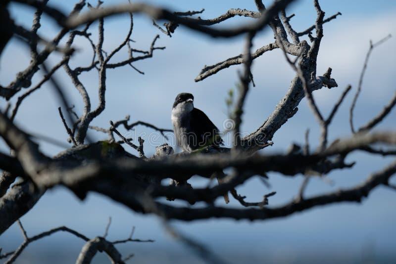Pájaro hermoso en una rama seca fotos de archivo libres de regalías