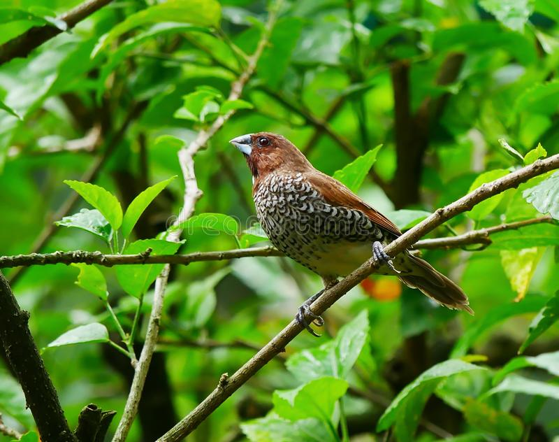 Pájaro, Kuala Lumpur Bird Park imagen de archivo