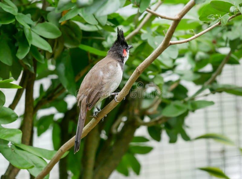 Pájaro, Kuala Lumpur Bird Park fotografía de archivo libre de regalías