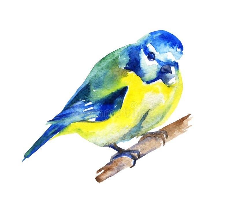 Pájaro lindo aislado en el fondo blanco watercolor libre illustration