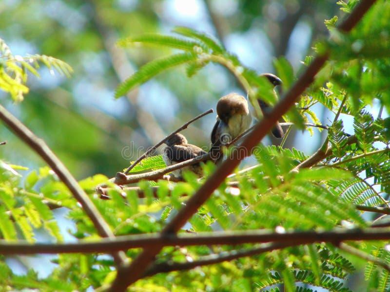 pájaro 3 imagen de archivo