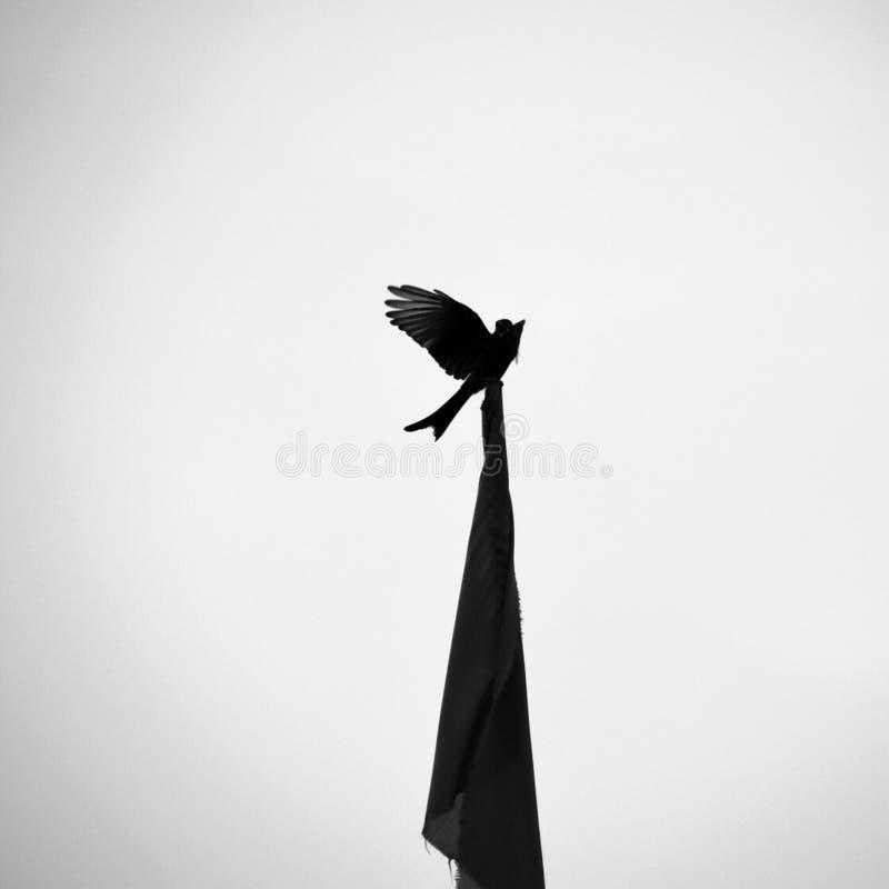 Pájaro negro en la bandera fotografía de archivo